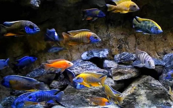 Fish Aquarium Home New Delhi
