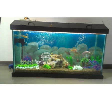 Fish Aquarium Home New Delhi Delhi