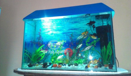 Fish Gallery Sagar Fish Aquarium