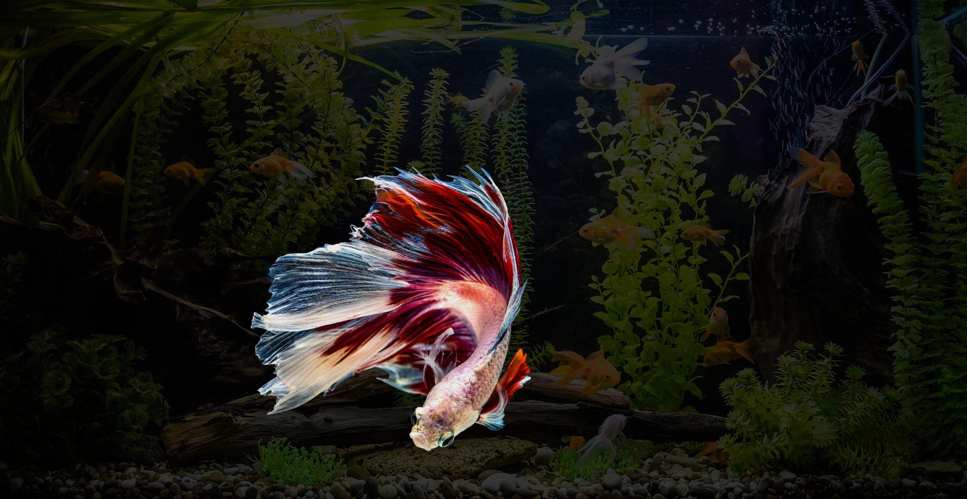 Home Sagar Fish Aquarium