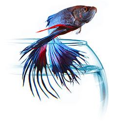 Sagar Fish Aquarium Shop Buy Accessories Tanks Distributor